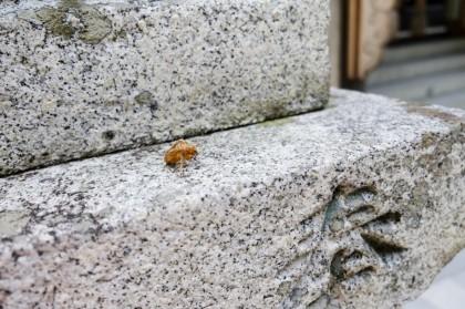 おいた蝉(せみ)の脱殻「祈願に来ていた夫婦」
